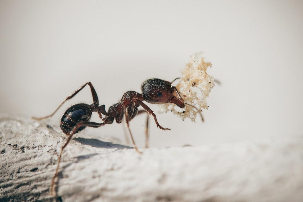 Öt bevált módszer hangyák ellen