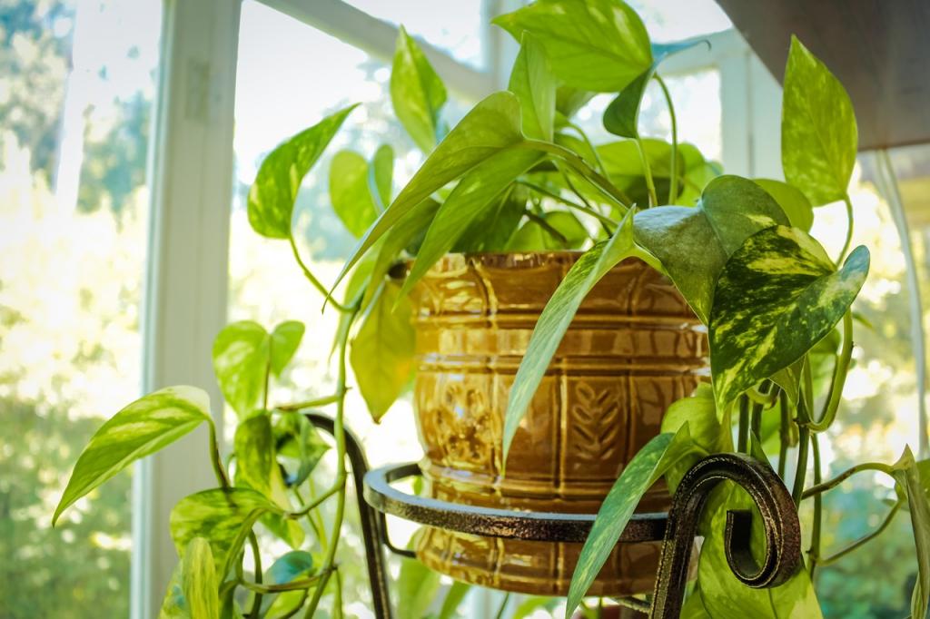 Így válhat belőled profi növénygondozó