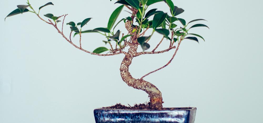 Így neveld a bonsaiodat: 5 tipp, hogy sokáig pompázzon a fácskánk